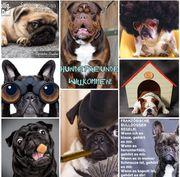 Bulldoggen Whatsapp Gruppe - Mops