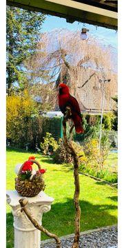 Edel Papagei wunderschön mit grosse