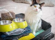 Katzenbetreuung Katzensitter mit Erfahrung
