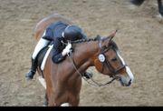 Reitbeteidigung Reiter sucht Pferd