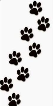 Mobile Tier Betreuung Katzensitter Hundesitter