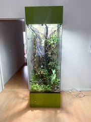Terrarium Glas Regenwald Glasterrarium Regenwaldterrarium