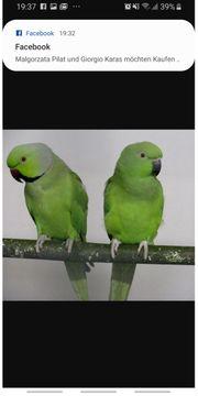 Suche Papageien