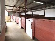 Pferdeboxen Frei Pferdepension