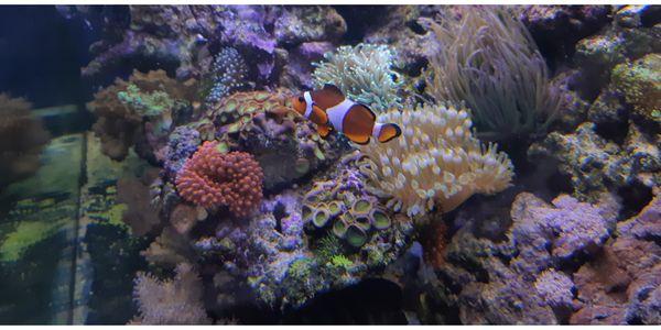 Meerwasser aquarium Meerwasseraquarium