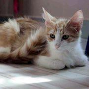 Lieber Katzenbub Lucky sucht Dich