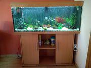Aquarium mit Fischen und umfangreichen