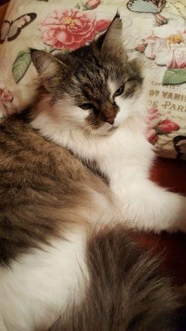 Marry wird vermisst: Kleinanzeigen aus Dornbirn - Rubrik Zubehör für Haustiere