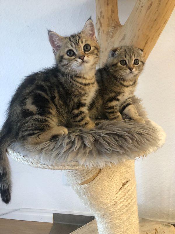 Gratis basel katzen baby Alle Katzen
