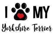 Yorkshire-Terrier Mädchen gesucht