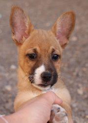 BERTUS-Hundebub aus dem Tierschutz