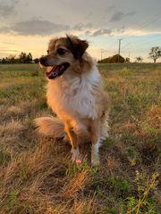 Biete Hundebetreuung Gassi Service