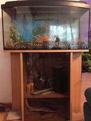 Aquarium Kombination Aquarium mit Schrank