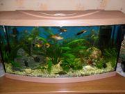 Aquarium vorn rund ca 120