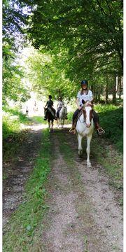 Reiterferien Reitunterricht im Rhein Neckar