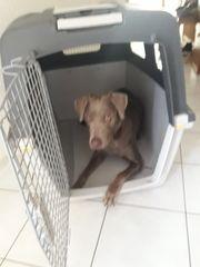 Hundebox XXL