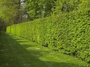 Mache Ihren Garten fitt