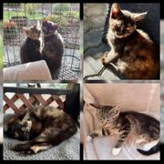 2 Baby Katze Kitten Nelly