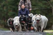 Fahrten mit Schlittenhunden
