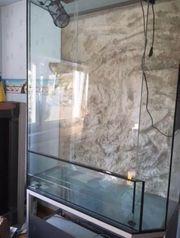 Terrarium mit jemenchamäleon