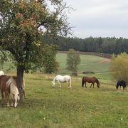 Pferde-WG im Offenstall hat 2