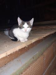 Katzenkinder suchen gutes Zuhause