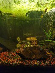 tausche Fische gegen Pflanzen