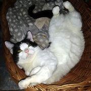 Katzenbub Jimmy liebt es zu