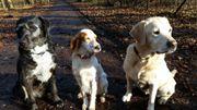 Private Hundebetreuung mit Familienanschluss
