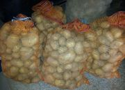 Kartoffeln Sorte Krone - frisch vom