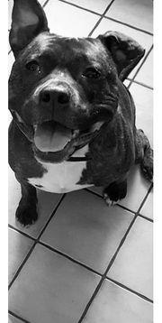 traumhund sucht liebevolles zuhause bitte