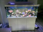 Juwel RIO 400 Meerwasseraquarium komplett