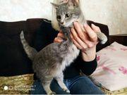 Katzen suchen ein sicheres Zuhause