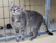 ODA - süßes Katzenmädel sucht ihre