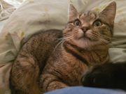 Katzenmädchen Krümel geb 04 20