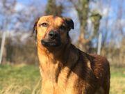 CHAKA - liebevolle Hundeseele sucht ihr