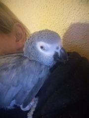 Pflegestellen Frei Papagei Kakadu