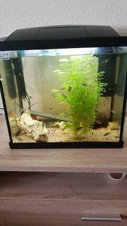 20 Liter Aquarium mit led