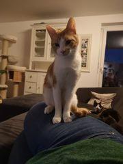 Katze vermisst in Bludenz