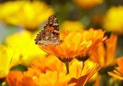 Pures Sonnenlicht Johanneskraut Ringelblume Sonnenblume