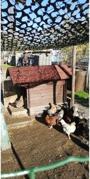 Kleintierstall Hühnerstall