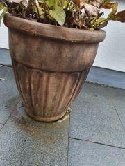 Terrakotta-Blumentopf