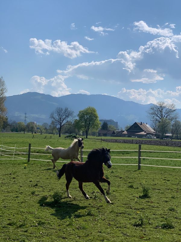 Reitbeteiligung Pflegepferd Pflegepony eigenes Pony