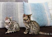Katzen Katze Kater Kitten Kätzchen