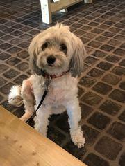 Ferienbetreuung für unseren Hund gesucht