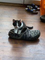 Kleine Katzen suchen neues Zuhause