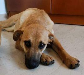 Fontana, geb. ca. 05/2020, lebt in GRIECHENLAND, auf einer privaten Pflegestelle
