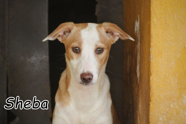 Sensible Sheba möchte dem Tierheim