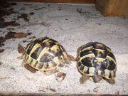 Schildkrötenland