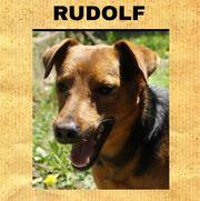 RUDOLF - ruhiger Hundebub bildhübsch und